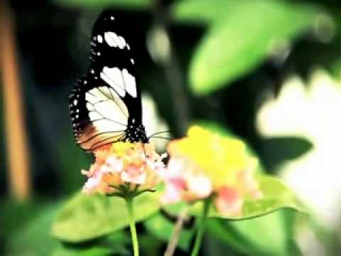 The Butterfly Waltz - The Most Beautiful Music In The World